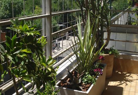 Dise o y ejecucion de proyectos para balcones for Plantas para balcones
